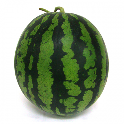[참농부]싱싱 수박 특품 7kg