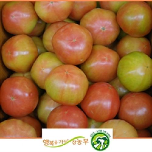 무농약 완숙토마토 5kg(2-3번)