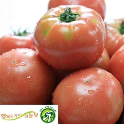 저농약 완숙토마토-주스용 5kg(1,4-5번)